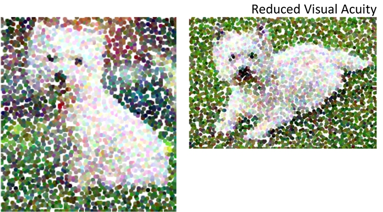 Example of recognition challenges with reduced visual acuity.