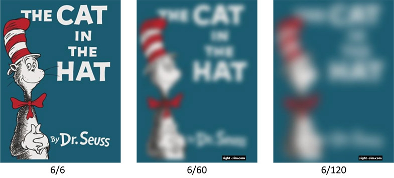 Does the hat still look like it's on a cat?