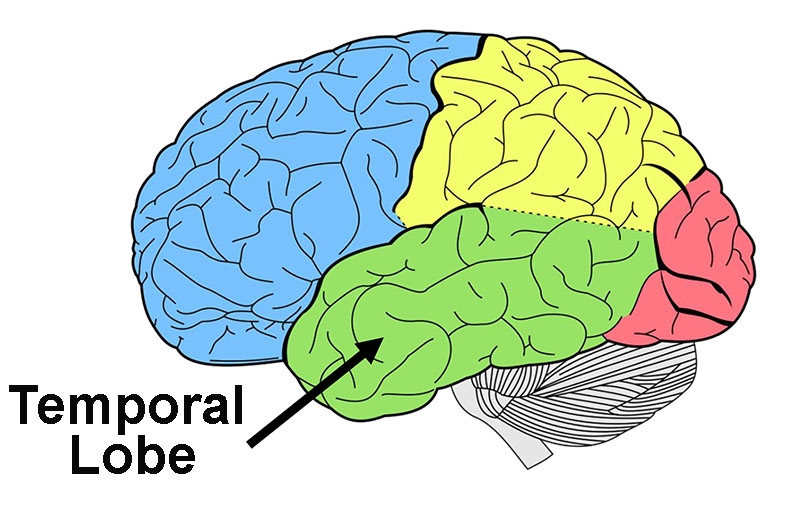 On this diagram, green marks the area of the left temporal lobe.