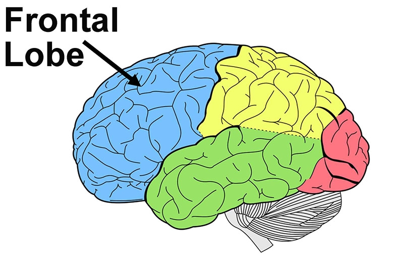 Diagram showing left side of the brain with the frontal lobe, coloured blue and indicated with a black arrow.