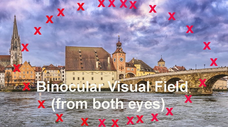 The outer edges of your visual field, illustrated here with red crosses, are called your peripheral vision.