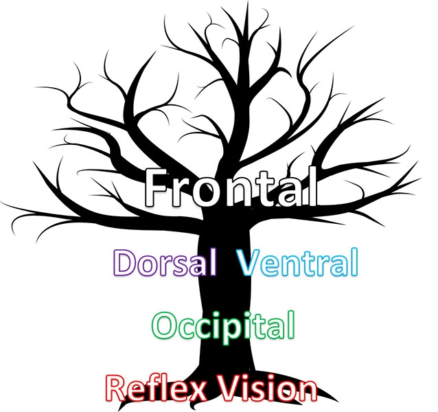 hierarchy of vision