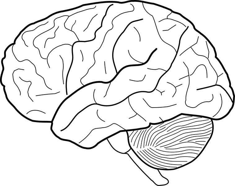 You can't understand CVI without understanding the visual brain.